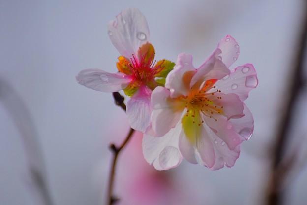アーコレード #湘南 #鎌倉 #花 #flower #kamakura #大船フラワーセンター