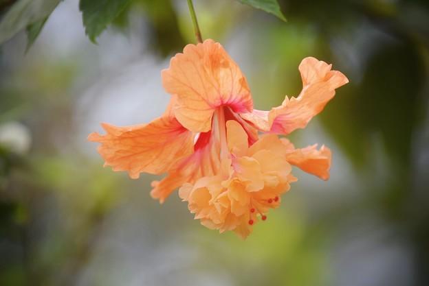 オレンジフラミンゴ #湘南 #鎌倉 #花 #flower #花 #kamakura