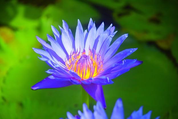 クリントブライアント #湘南 #鎌倉 #花 #flower #花 #kamakura