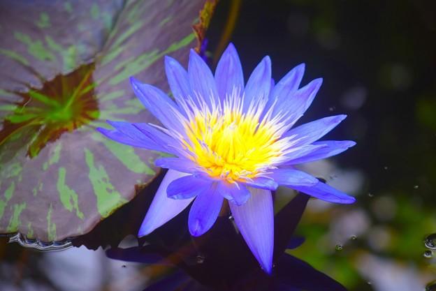 スターオブサイアム #湘南 #鎌倉 #花 #flower #花 #kamakura
