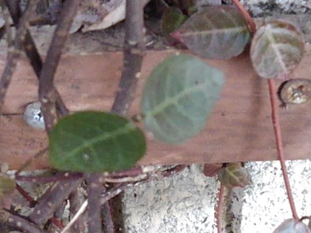 緑の小さな葉(2月9日)
