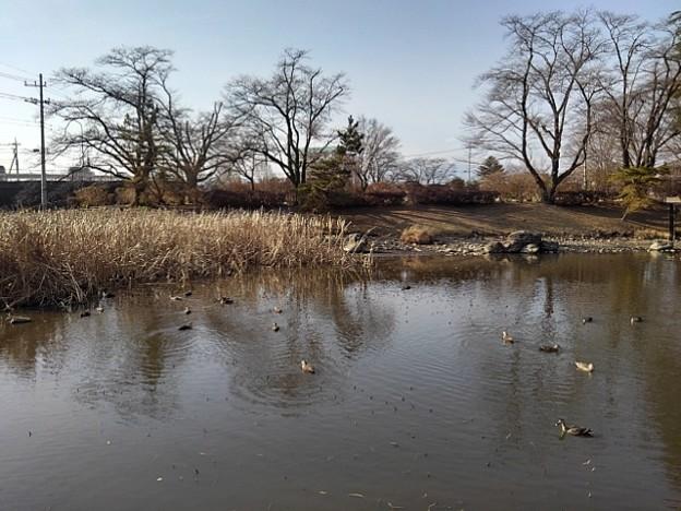 長峰公園の池の景色(2月14日)