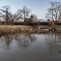 Photos: 長峰公園の池の景色(2月14日)