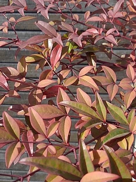 庭の葉(2月18日)