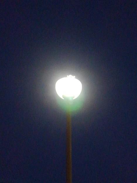 ベイシア沿いの街灯(2月20日)