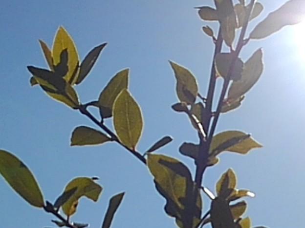 庭の葉(2月19日)