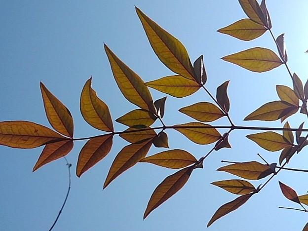庭の葉(2月22日)