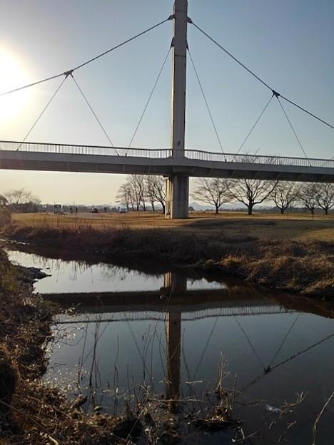 ゆうゆうパークの小川の映り込み(2月20日)
