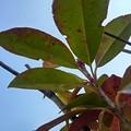緑の葉と空(2月22日)