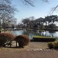 Photos: 烏ヶ森公園の池(2月21日)