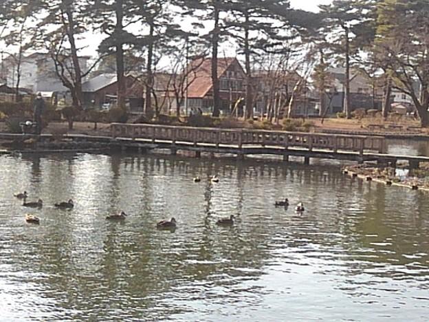 烏ヶ森公園の池の橋(2月21日)