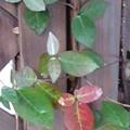 小さな葉(3月2日)