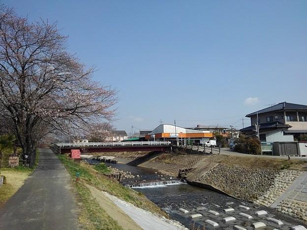 桜の花が咲いた川沿いの道(3月26日)