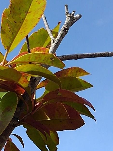 葉と青空(3月5日)
