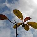 葉と雲(3月5日)