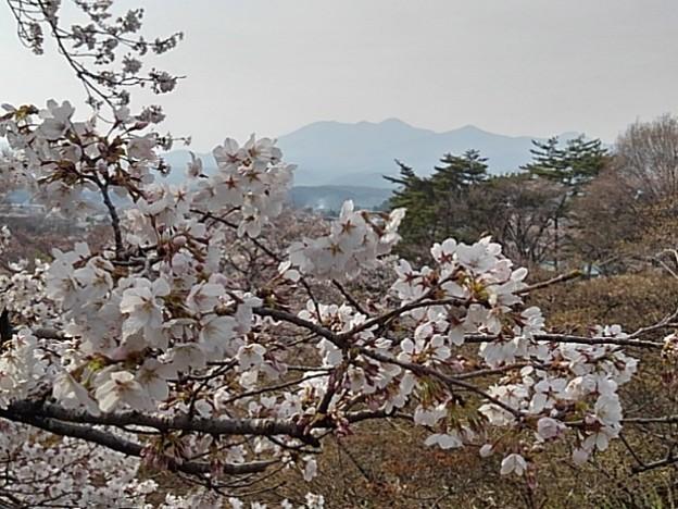 桜と山(3月27日)