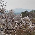 Photos: 桜と山(3月27日)