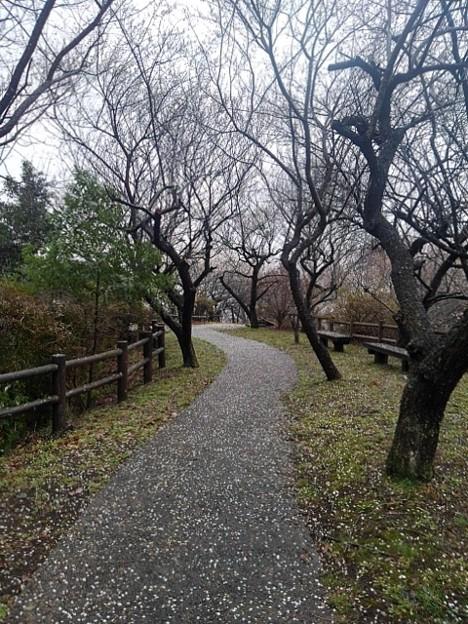 川崎城跡の丘の道(3月21日)