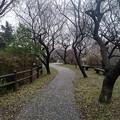 Photos: 川崎城跡の丘の道(3月21日)