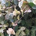 白い葉(2月26日)