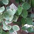 緑の葉(2月26日)