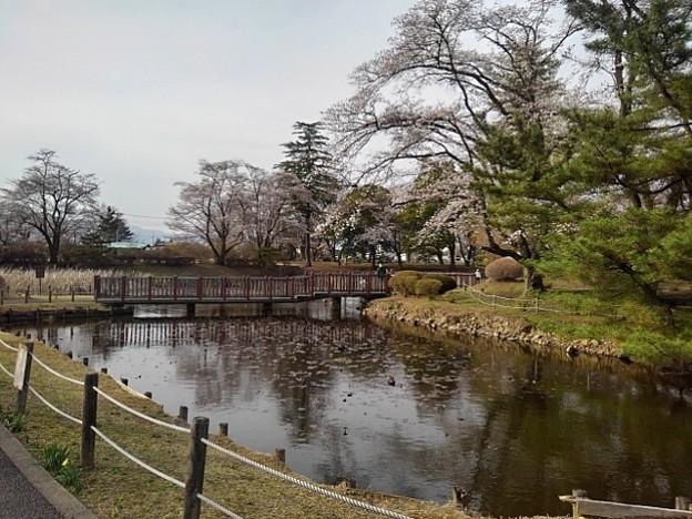 長峰公園の桜の見える池(3月27日)