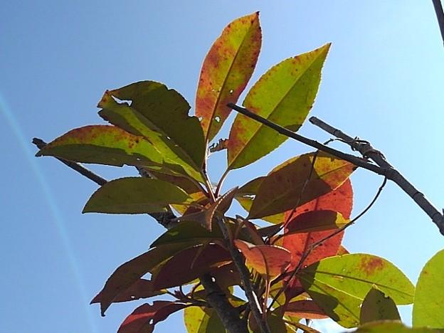 赤と緑の葉と空(3月9日)