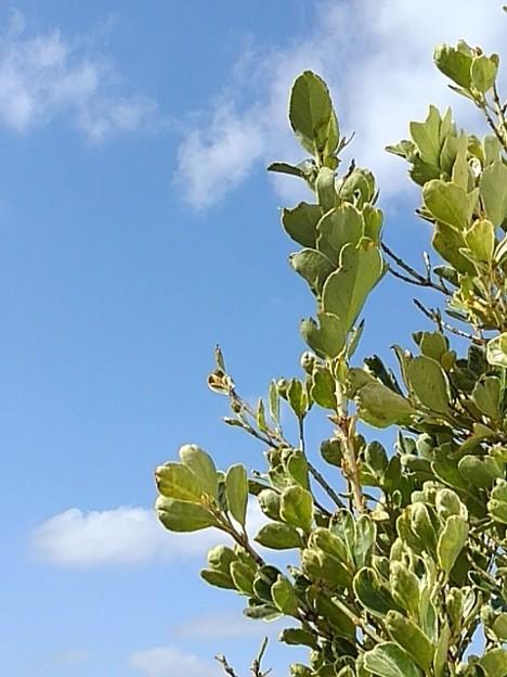 黄緑の葉と空