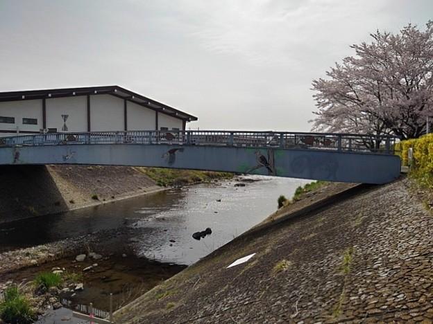 桜と橋(4月1日)