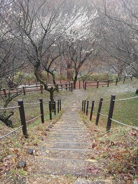 川崎城跡の丘の階段(3月21日)