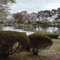 烏ヶ森公園の池(4月3日)