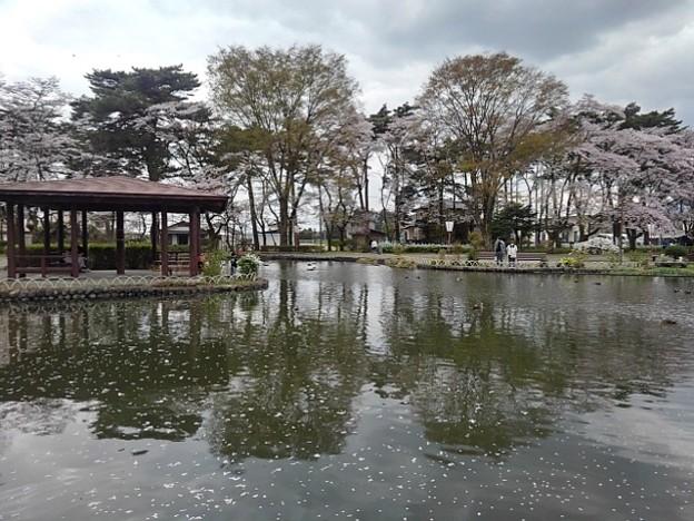 烏ヶ森公園の池の休憩所のある景色(4月3日)