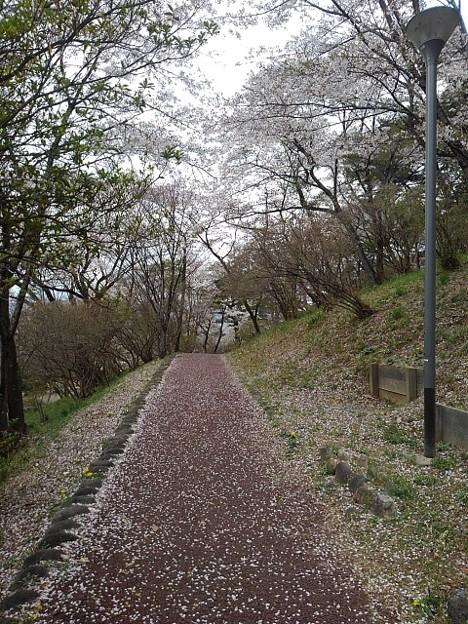 烏ヶ森公園の丘の道(4月3日)