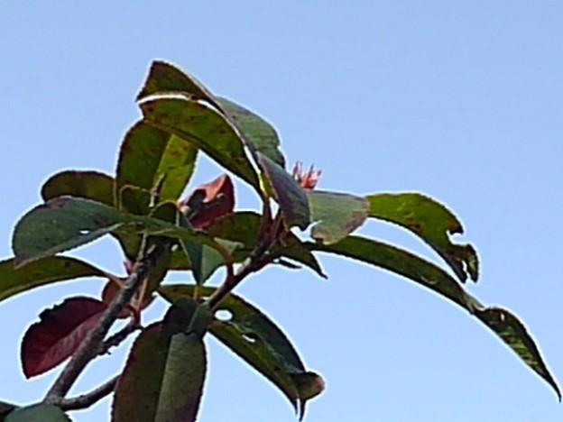 葉と空(3月17日)