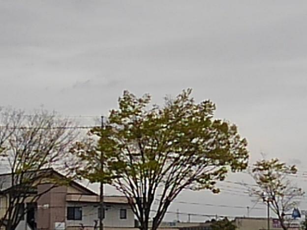 若葉(4月4日)