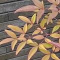 葉とおしゃれな壁(3月19日)