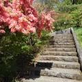 Photos: 長峰公園の丘の階段と道(4月18日)