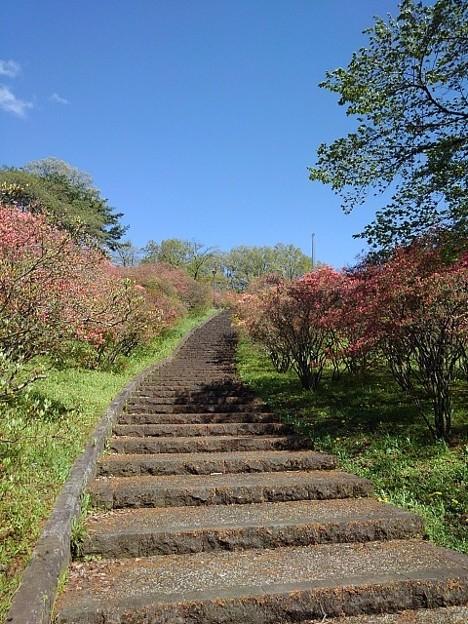 ツツジと上り階段(4月18日)