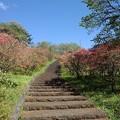 Photos: ツツジと上り階段(4月18日)