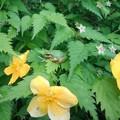 花とカエル(5月1日)