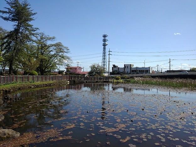 長峰公園の池(4月18日)