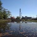 Photos: 長峰公園の池(4月18日)