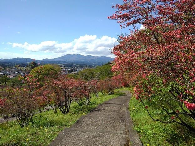 奥に山が見える長峰公園の丘の道(4月18日)
