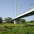 Photos: ゆうゆうパークの白い陸橋(5月4日)
