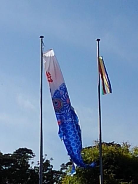 那須野が原公園の鯉のぼり(5月6日)