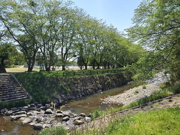 石垣の土手もある川(4月27日)