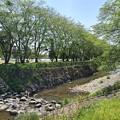 Photos: 石垣の土手もある川(4月27日)