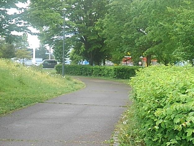 公園の散歩道(5月5日)