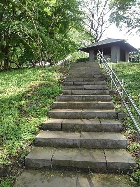 ゆうゆうパークの丘の階段(5月4日)