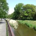 さくら市の川の歩道(5月4日)